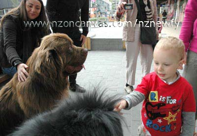 Newfoundland_dogs_Enzo & Henry in Container Mall, Christchurch