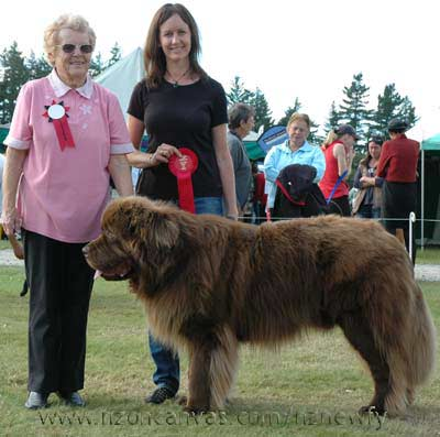 Newfoundland Enzo wins Best in the A&P show