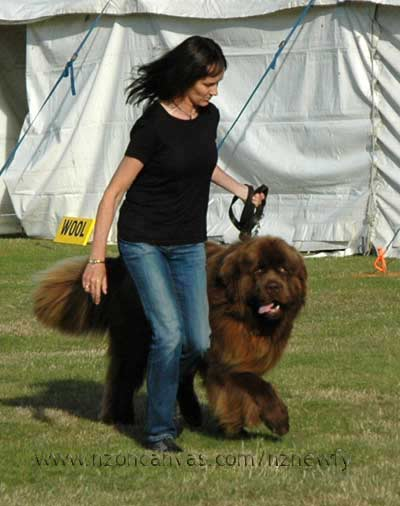 Michelle with Newfoundland Enzo in the ring